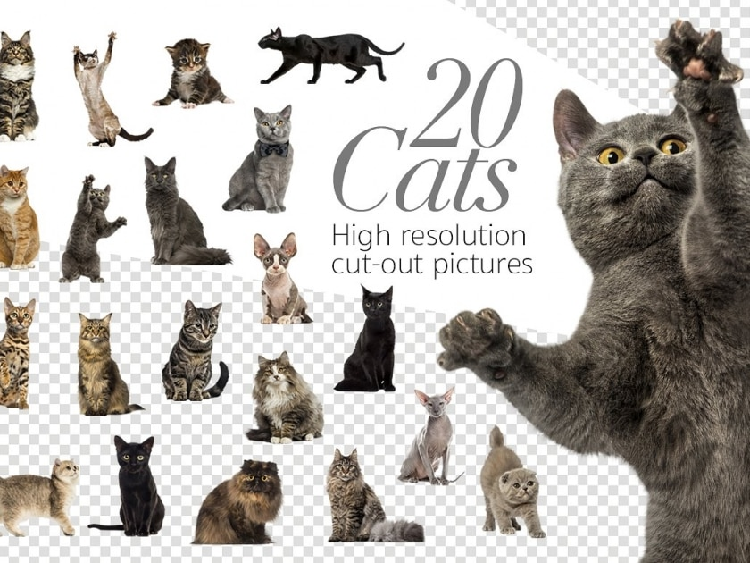 20 Cats - Cut-out High Res Pictures