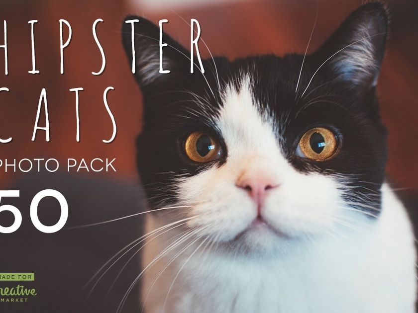 Hipster Cats Photo Pack
